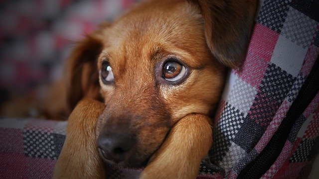 you will get a sad dog if you're not preparing your pet for relocation correctly