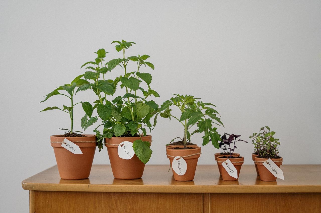 Five pot plants on a table.